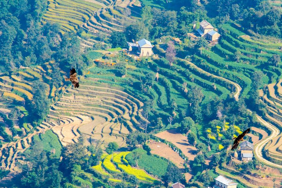 nepal546.jpg