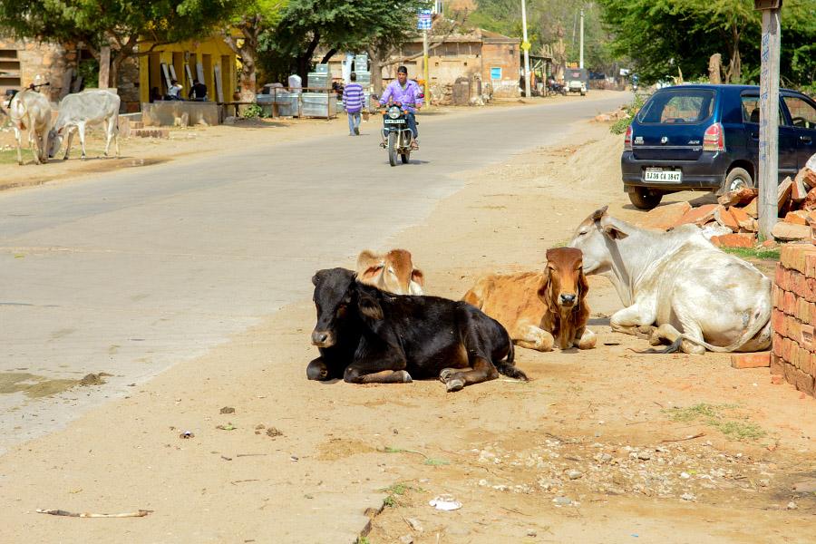 India181.jpg