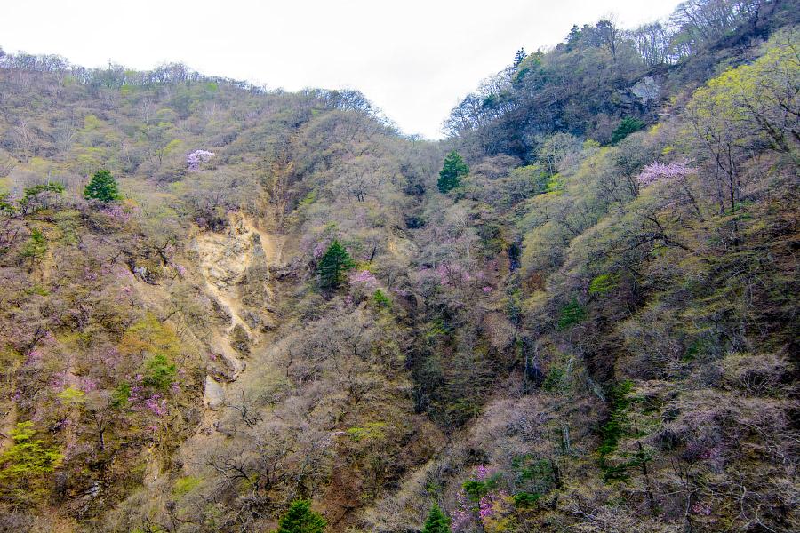 japan203.jpg