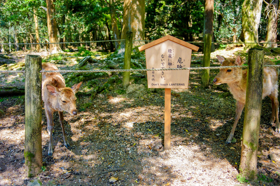 japan1032.jpg