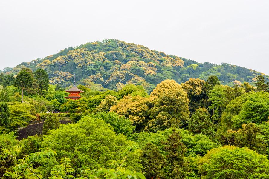 japan1301.jpg