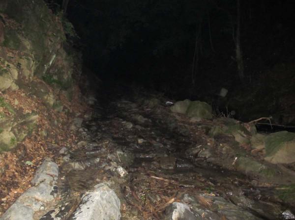 Ночная дорога в лесу