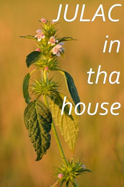 julac in tha house