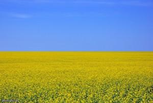 Флаг-Украины-300x201