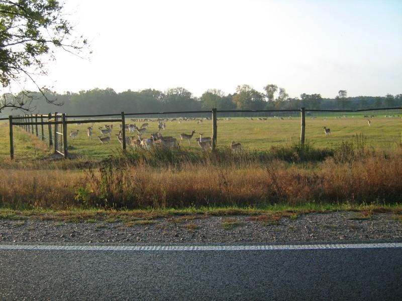 Октябрь 2012 006