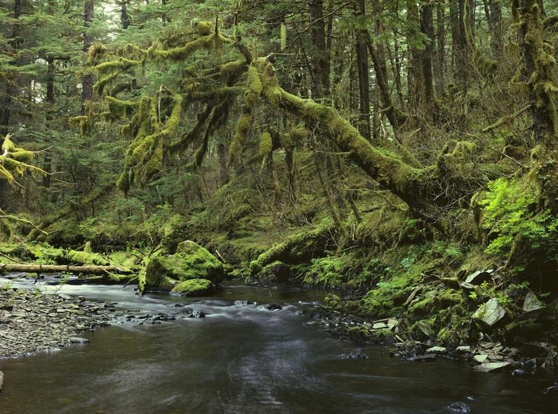 peaceful forest southeast alaskan range