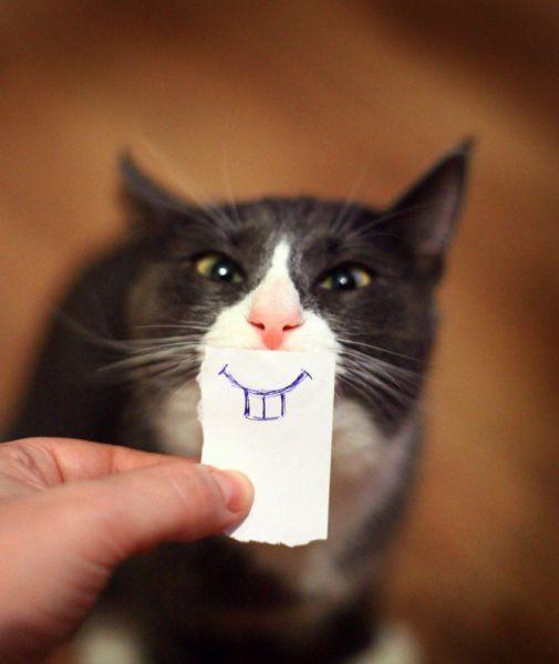 от улыбки станет всем светлей фото
