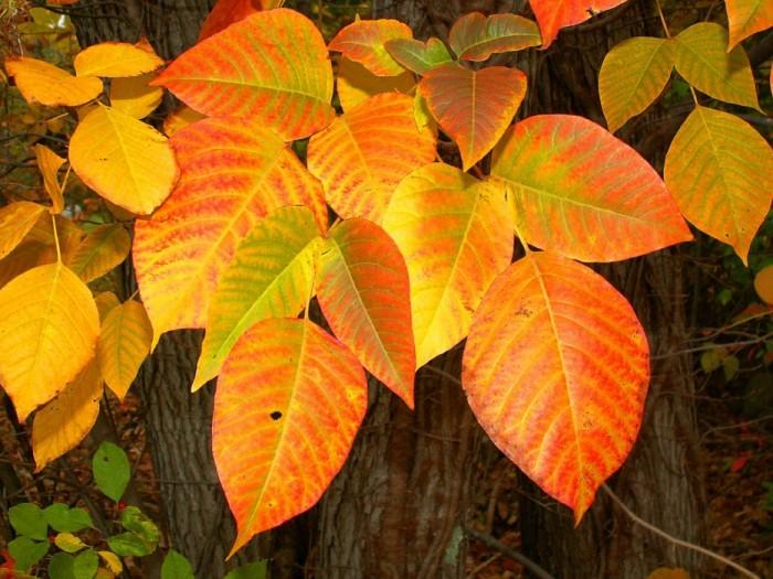 листья1