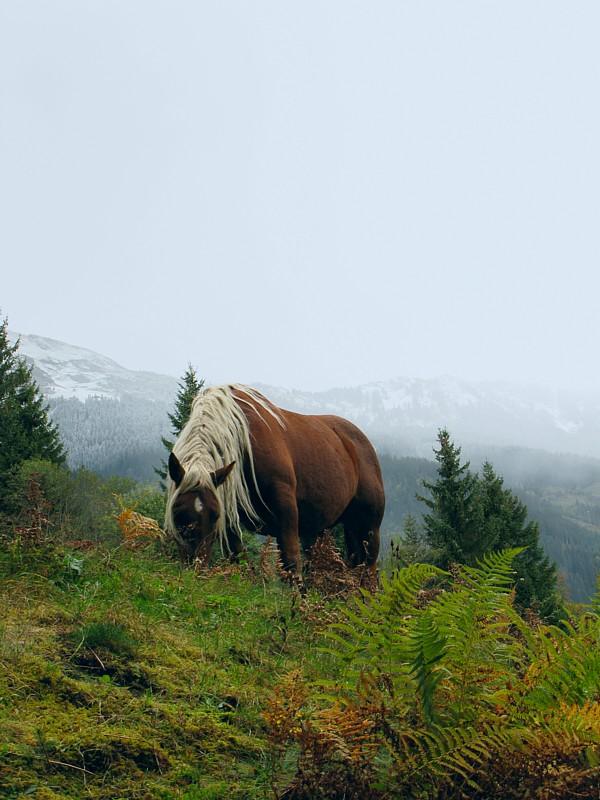 Austria_170