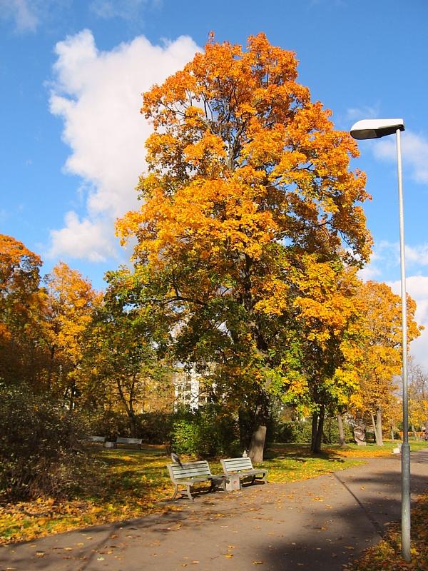 Riga_a1383