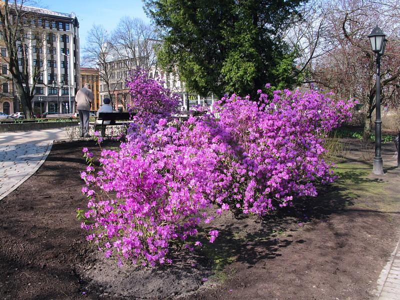 Riga_a1480.JPG