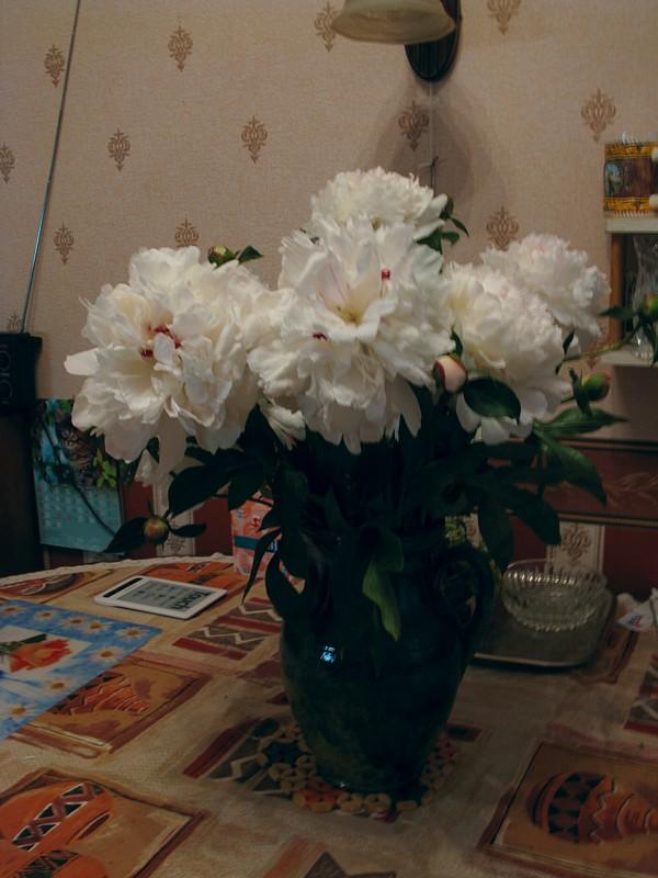 Flower_279.JPG