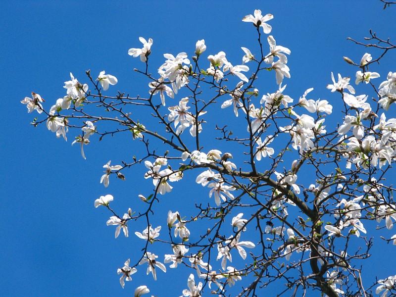 Flower_285.JPG