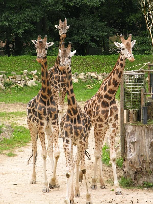 Zoo_95