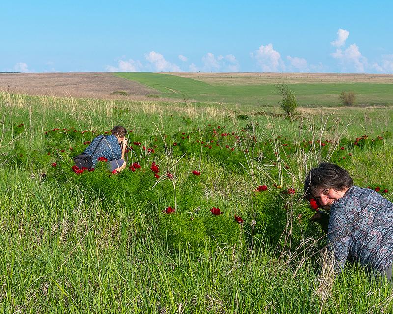 Евгений и Лена фотографируют пионы