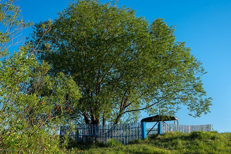 Родник и дерево за оградой на холме