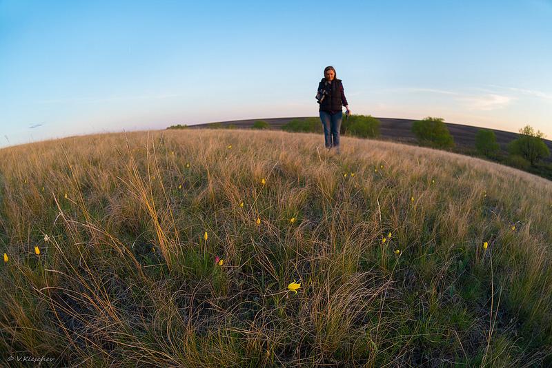 На полянке круглой земли