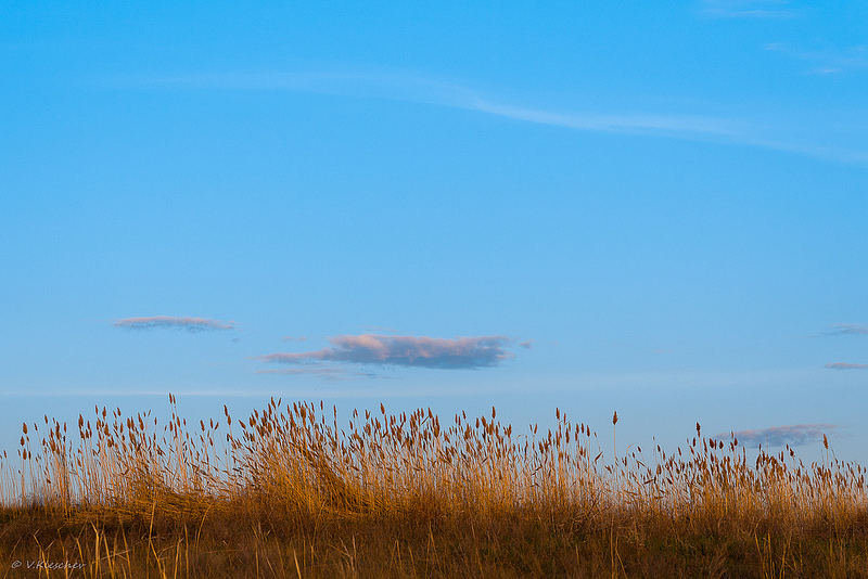 Пейзаж с травой