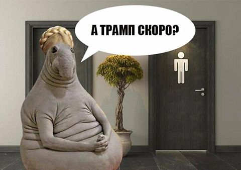 Тимошенко3