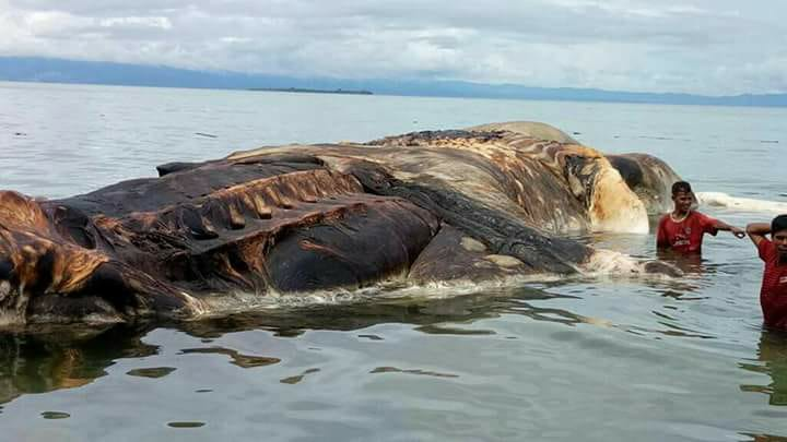 Картинки по запросу В Индонезии на берег выбросилось неизвестное гигантское существо