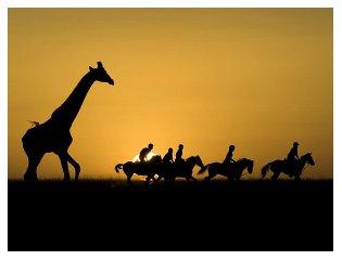Kenya_Safari