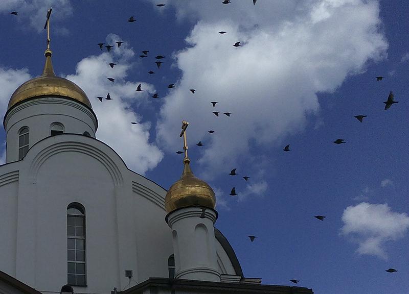 Птицы над храмом.jpg
