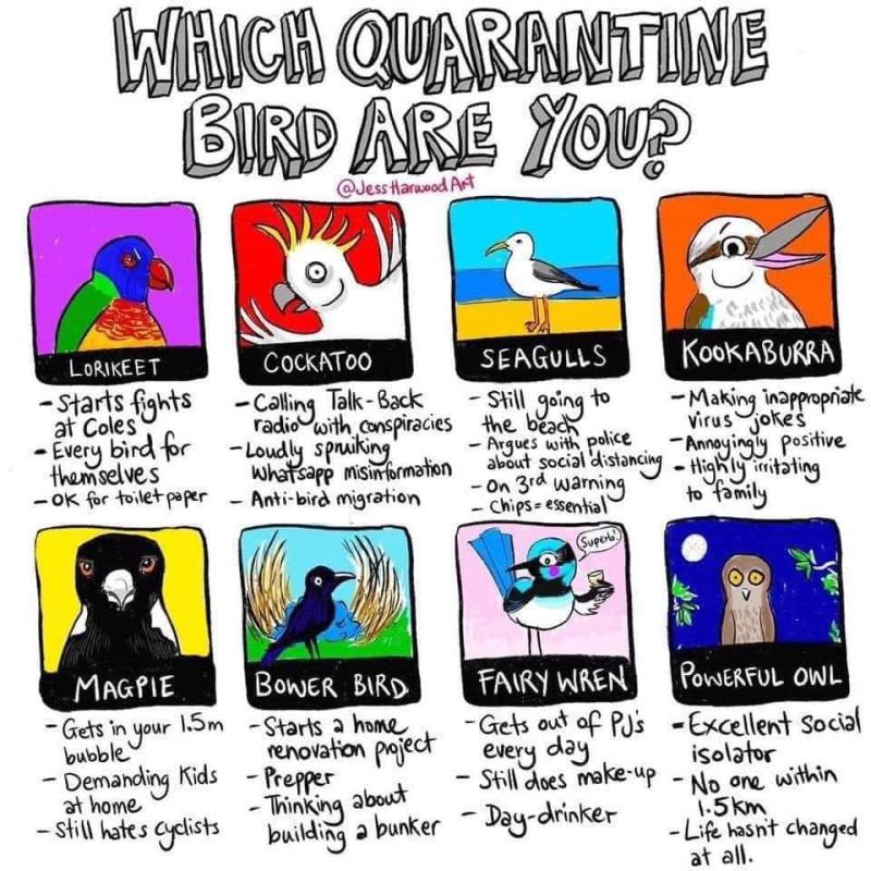Я - сова, судя по картинке 8-)