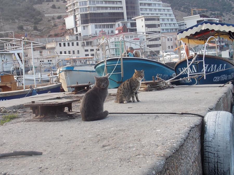 кошки в севастополе картинки горячей линии мку