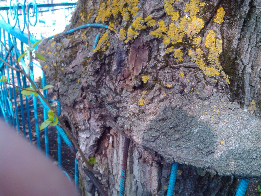 Дерево монстр2