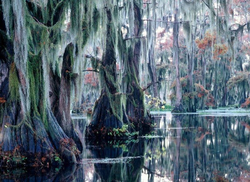 1-Кипарисовое Озеро Каддо в Техасе, США