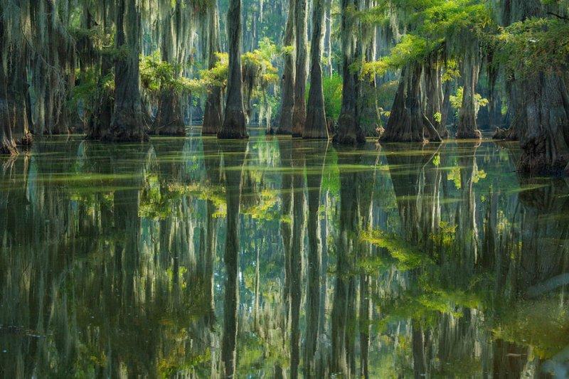 27-Кипарисовое Озеро Каддо в Техасе, США