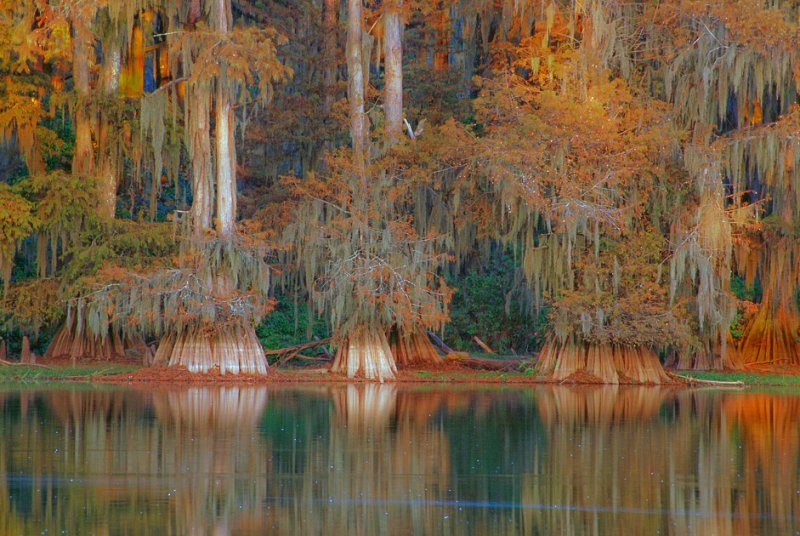 11-Кипарисовое Озеро Каддо в Техасе, США