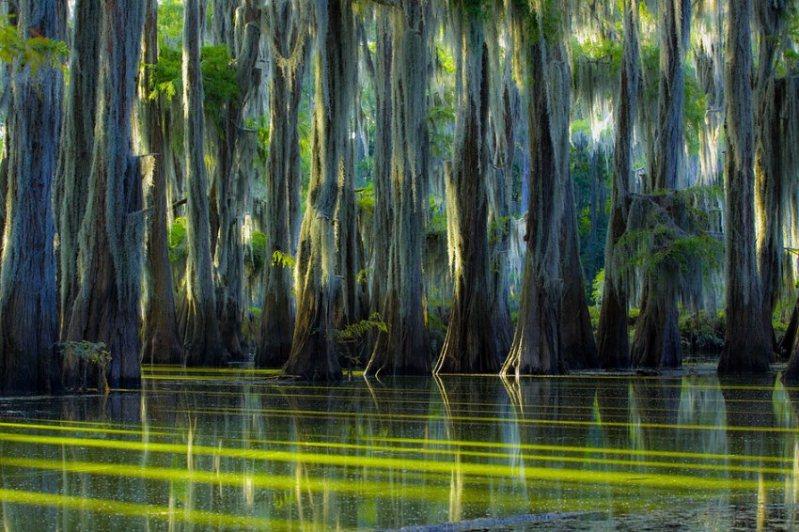 18-Кипарисовое Озеро Каддо в Техасе, США