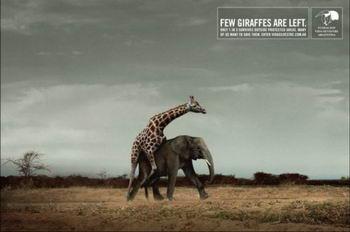 жираф слона