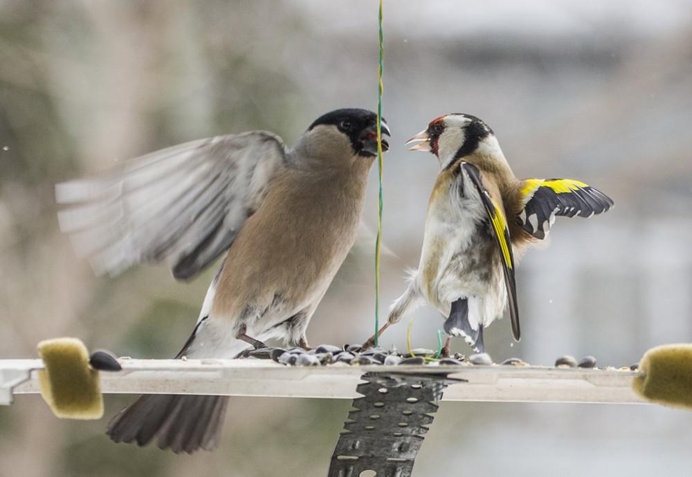 Птички польку танцевали.