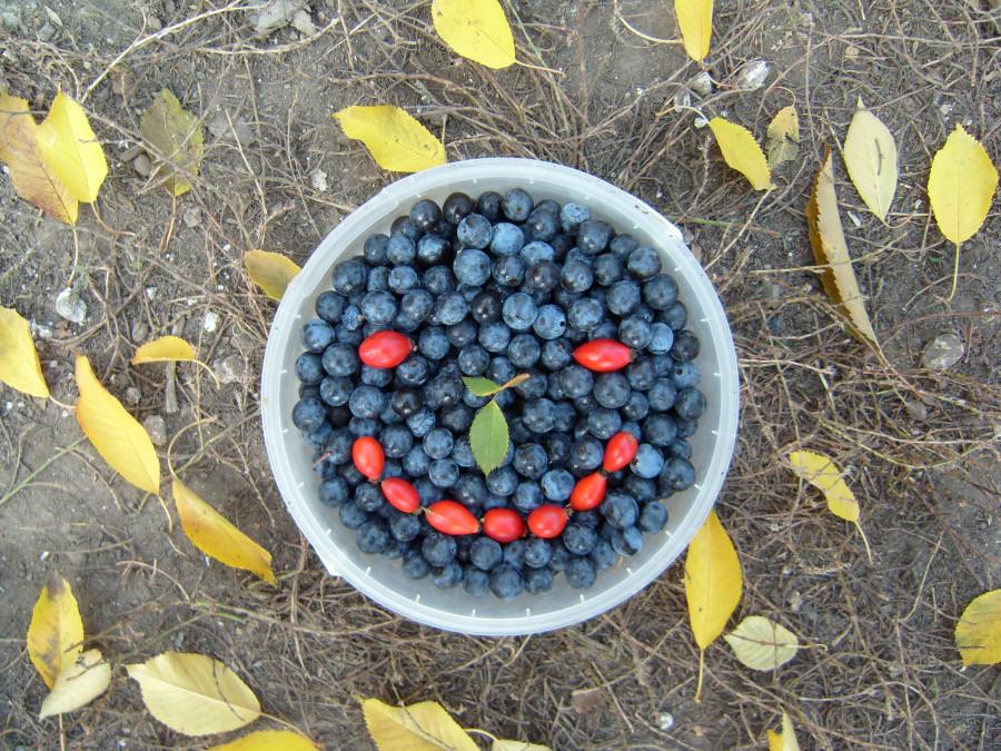Сбор урожая в Луганской степи.