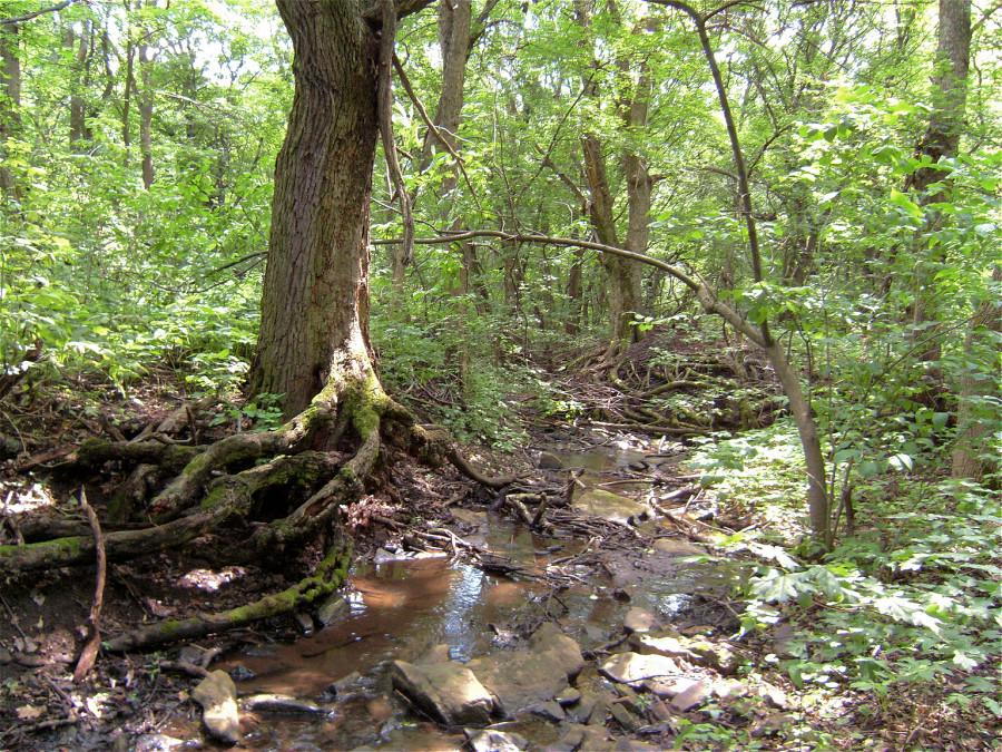 Лес в окрестностях п. Байрачки - п. Малоивановка Луганской обл.
