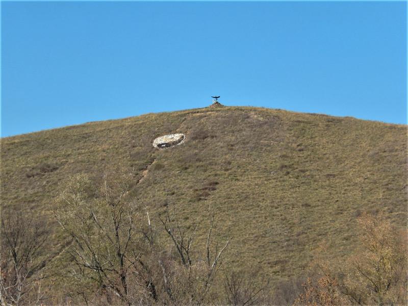 Эдельвейс на вершине холма. Луганская область.