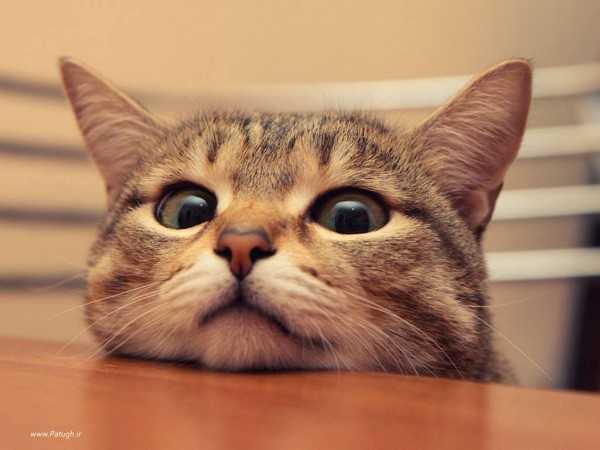 cat_www.patugh.ir-1