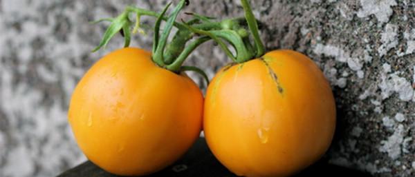 sorta-tomatov-26
