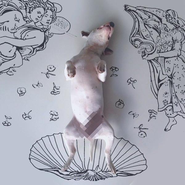 pitbull_illustration_04