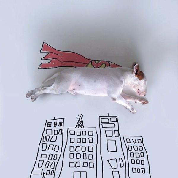 pitbull_illustration_06