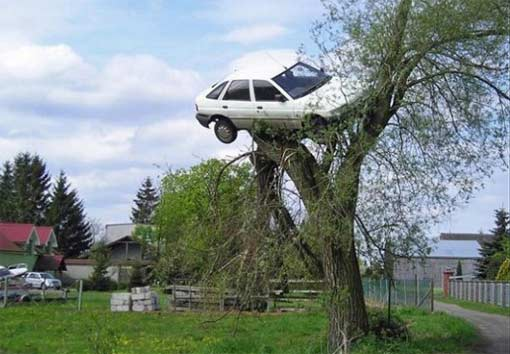 avto-priparkovalos-na-dereve
