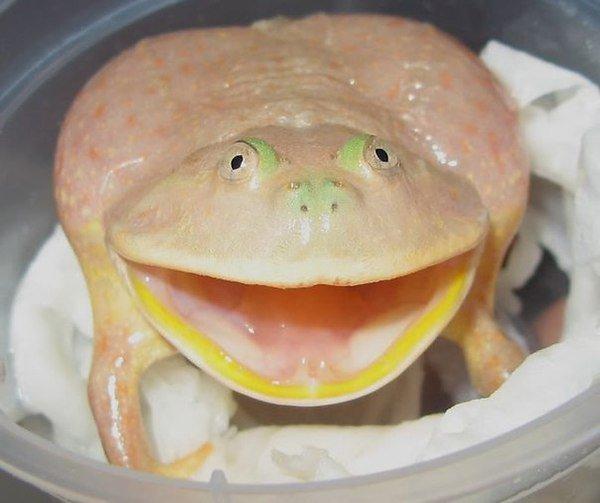 budgets-frog