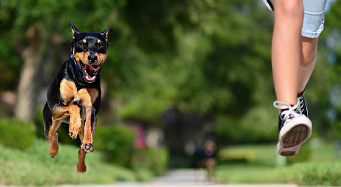 paura-dei-cani-2.jpg