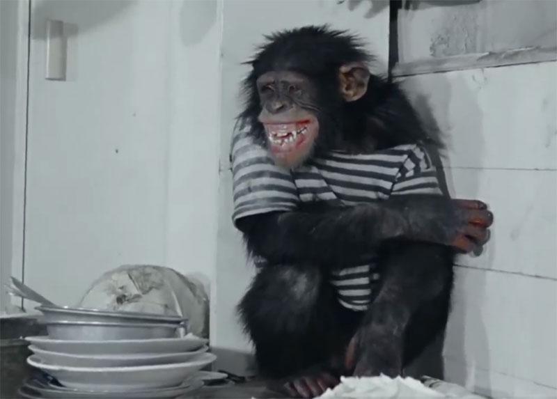 Борцам за права животных фильм Полосатый рейс лучше не смотреть 007.jpg