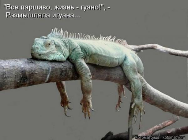 1354032679_lol54.ru_kotomatrix_063