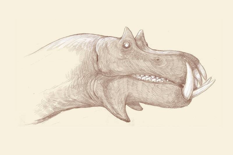 98hq1-hippo