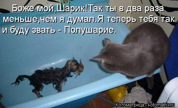 96939840_large_kotomatritsa_b