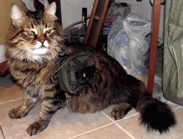 swat_cat_1